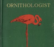 Camps and Cruises of an Ornithologist – Frank Chapman – First edition 1908