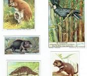 Australian Natural History Trade Cards