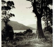 Original Photograph Lake St Clair – Tasmania – by Peggy C Macintyre