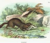 A Handbook to the British Mammalia – Richard Lydekker – 1896
