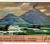 Antarctic Scenes Set of Six – Liebig Trade Cards 100 Years Old