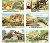 Australian Mammals – Trade Cards over 100 Years Old