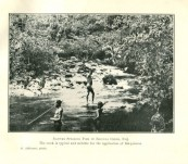 "R. Hamlyn-Harris (Ed.) – ""Memoirs of the Queensland Museum – Vol. V"" – 1916"