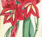 Choice Garden Flowers (With Twelve Beautiful Hand Coloured Plates) –  James Andrews 1847