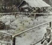 Original Press Photograph –  Australian Graves – Battle of Buna-Gona – 1942/43